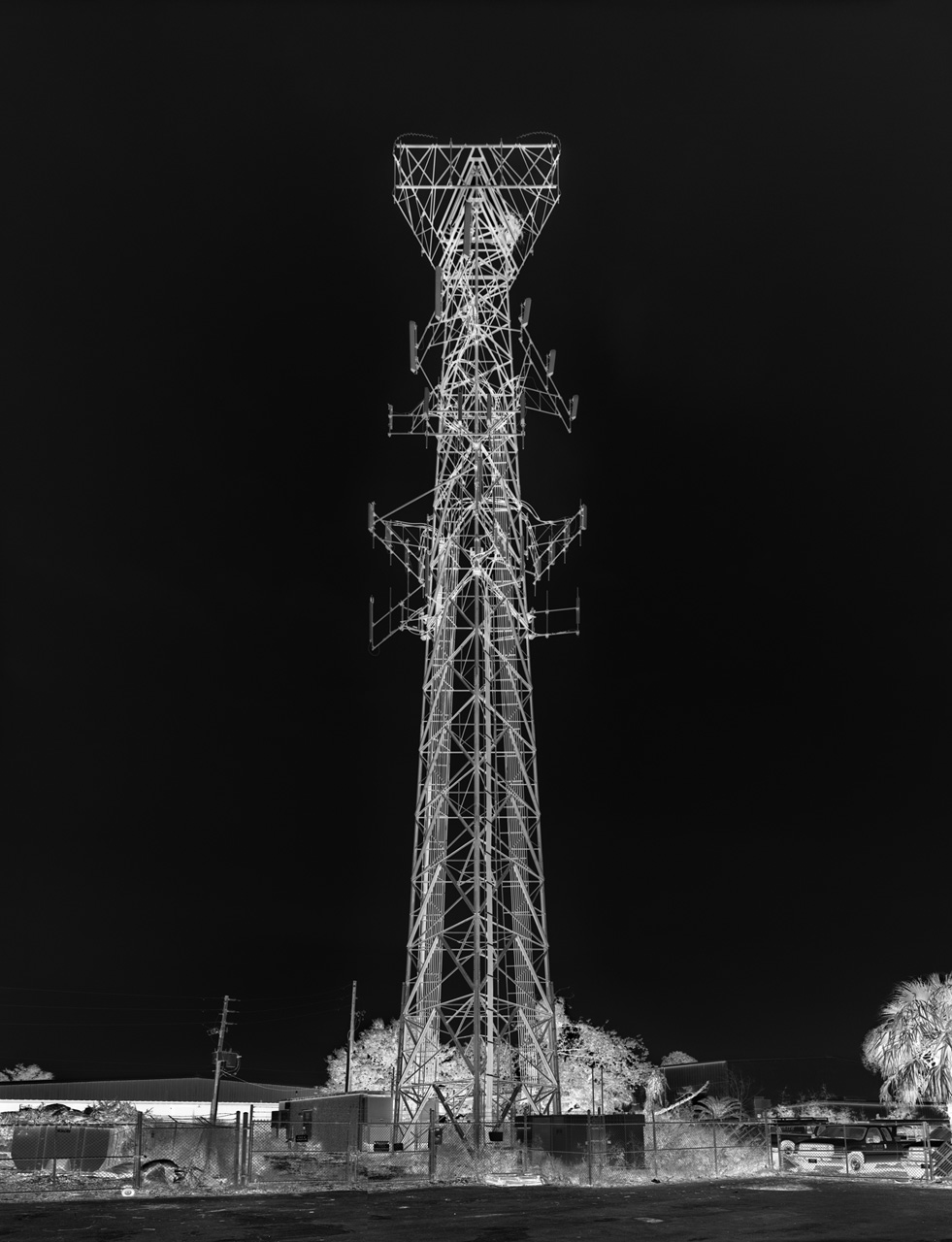 Florida-tower-with-nest-2012.jpg